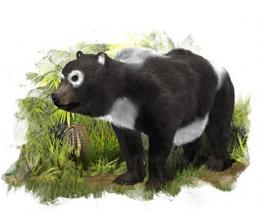 Giant panda's 'cousin' lived in Zaragoza