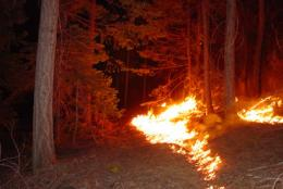 Let it burn: Prescribed fires pose little danger to forest ecology, study says