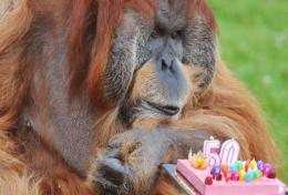 Major celebrates his 50th birthday at the La Boissiere-du-Doree zoo