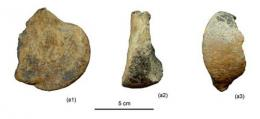 Mammalian fossil first-ever found in the Cenozoic deposits of the Lunpola Basin, Northern Tibet