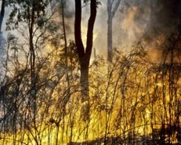 Managing fire and biodiversity
