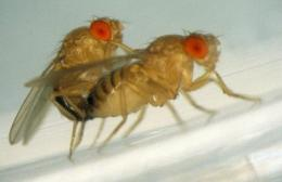 Mapping a post-coital switch in the female fruit fly's mind