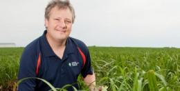 Maps of Miscanthus genome offer insight into grass evolution