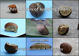 Mexican jumping beans may influence robot design