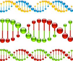 Mobile MITEs jump to fame in gene regulation