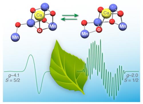 Разгадана тайна важнейшего соединения, участвующего в фотосинтезе