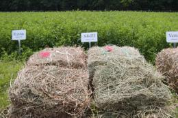 New alfalfa variety could be big boost to dairy industry