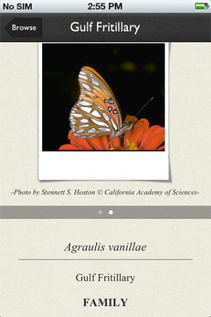 New app puts butterflies on your phone