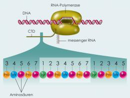 New details about gene regulation explained