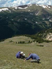Nitrogen pollution changing Rocky Mountain National Park vegetation, says CU-Boulder-led study