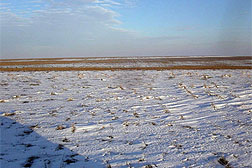 No-till farming helps capture snow and soil water