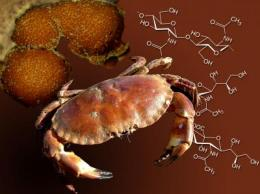 Pharmaceuticals from crab shells