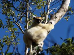New study shows pre-human effect on biodiversity in northern Madagascar