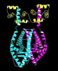 Protein structures give disease clues