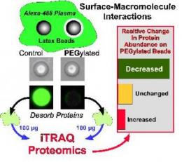 Proteomic analysis of immunocamouflaged surfaces