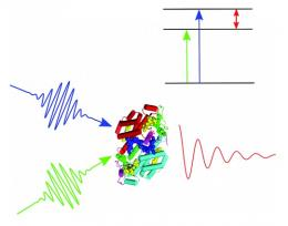 Study supports role of quantum effects in photosynthesis