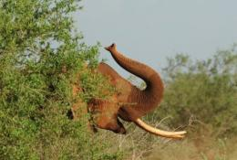 Rangers recovered 50 kg of elephant tusks after a gunfight with suspected poachers