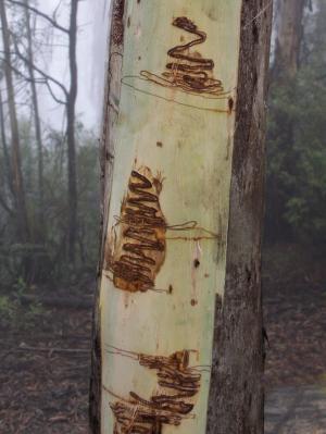 'Retired' scientists unmask bush graffiti artist