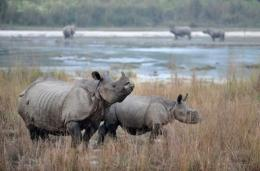 Rhinos are killed for their horns, which are prized for their reputed medicinal qualities in China