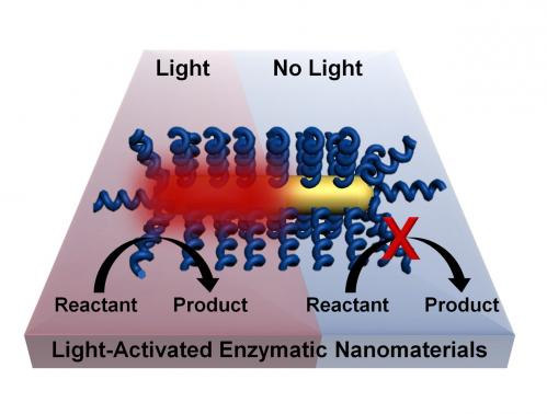 Rice uses light to remotely trigger biochemical reactions