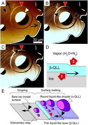 The hidden nanoworld of ice crystals: Revealing the dynamic behavior of quasi-liquid layers