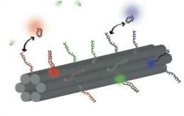 Scientists engineer novel DNA barcode