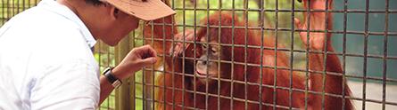 Seeing the world through the eyes of an Orangutan