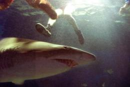 Sharks are common in Australian waters but deadly attacks have previously been rare