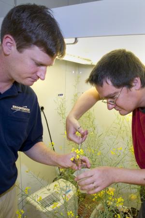Вычислительная модель семени позволяет понять баланс синтеза белков и масел
