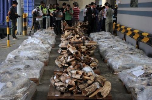 Smuggled ivory in Hong Kong