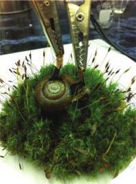snail power