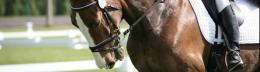 Straight from the horse's mouth — study reveals owners supplement choices