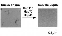 Study describes molecular machinery that pulls apart protein clumps