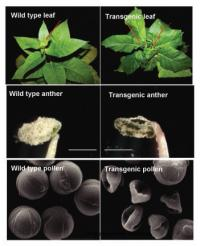 Study offers insight into delicate biochemical balance required for plant growth