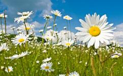 Study ups plant CO2 intake estimates