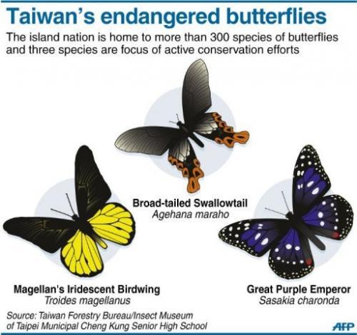 Taiwan's endangered butterflies