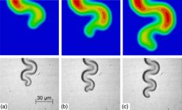 Scientists investigate mystery of telephone cord buckles