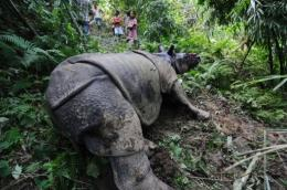 The rhinos were found bleeding from gunshot injuries and huge wounds on their snouts