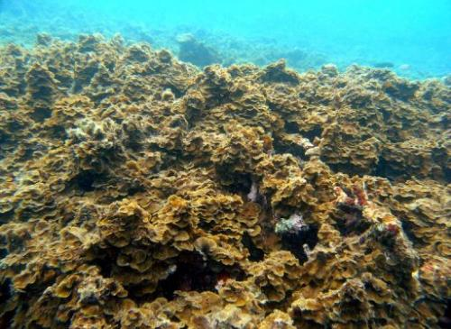 The World Heritage-listed Great Barrier Reef remains at serious threat of climate change