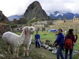 Tourists watch llamas at the ruins of Machu Pichu in Cuzco