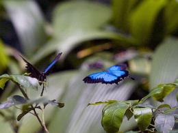 Trapping butterfly wings' qualities
