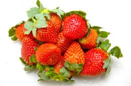 Trial strawberry variety shows exciting health potential