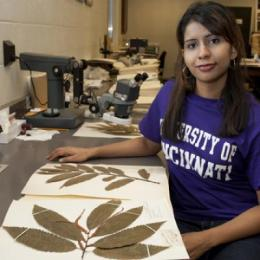 UC research tests new tool to guide reintroduction of the American chestnut