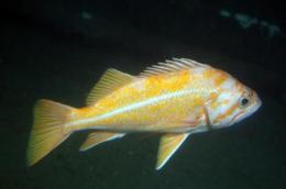 UCSB researchers to examine the effects of year-old NOAA West Coast 'Catch Shares' program