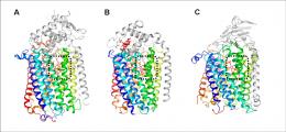 New study sheds light on evolutionary origin of oxygen-based cellular respiration