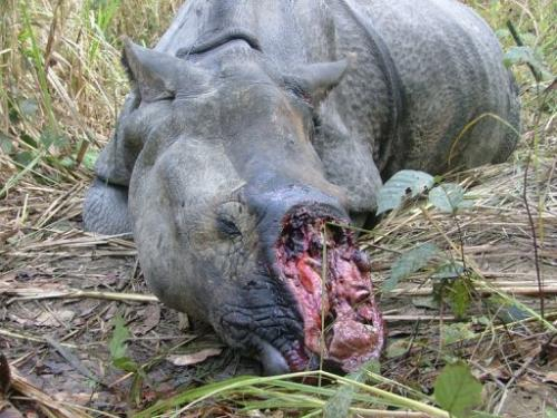 Vietnam has been named as the worst offender fuelling the trade in the black market for rhino horns