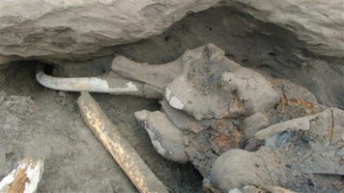 Well-preserved mammoth carcass found in Siberia
