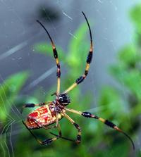 Why spiders do not stick to their own sticky web sites