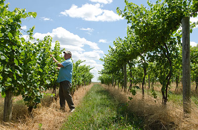 Wild weather to yield better Finger Lakes wines