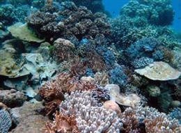 World's oceans get an acid bath